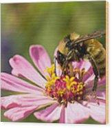 Bee At Work Wood Print