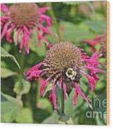 Bee Balm 5 Wood Print