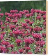 Bee Balm Bounty Wood Print