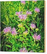 Bee Balm Of The Butterfly Gardens Of Wisconsin Wood Print