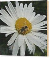 Bee Daisy Wood Print