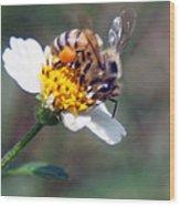 Bee- Extracting Nectar Wood Print
