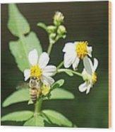 Bee-flower Pollen Wood Print