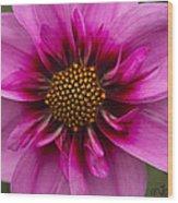 Bee Happy Dahlia Wood Print