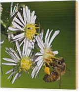 Bee Harvest Wood Print