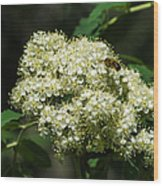 Bee Hovering Over Rowan Truss - Featured 3 Wood Print