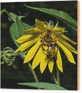 Bee In A Wild Flower Wood Print