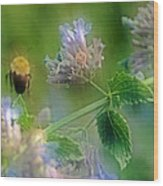 Bee In Catmint Wood Print