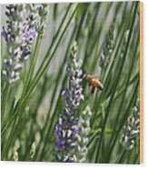 Bee In Lavender Wood Print