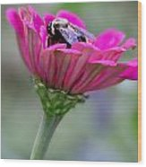 Bee In Pink Flower Wood Print