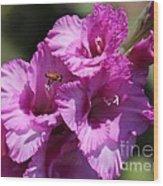 Bee In Pink Gladiolus Wood Print