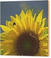 Bee In Sunflower Wood Print