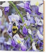 Bee In The Wisteria Wood Print