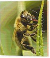 Bee Juice Wood Print