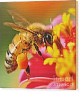 Bee Laden With Pollen 2 By Kaye Menner Wood Print