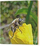 Bee Mimic On Primrose Wood Print