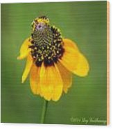 Bee My Coneflower Wood Print