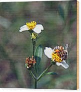 Bee- Nectar Wood Print