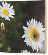 Bee On A Daisy 2 Wood Print