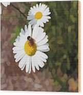 Bee On A Daisy Wood Print