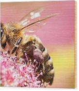 Bee On A Flower Wood Print