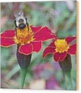 Bee On A Marigold 2 Wood Print