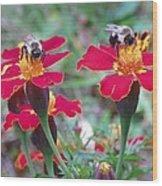 Bees On A Marigold 4 Wood Print