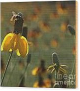 Bee On A Mexican Hat  Wood Print