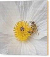Bee On A Poppy Wood Print