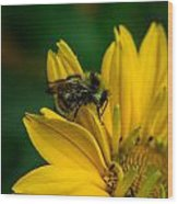 Bee On A Quest Wood Print
