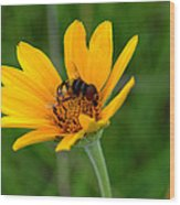 Bee On A Smooth Oxeye Wood Print