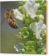 Bee On Basil Wood Print