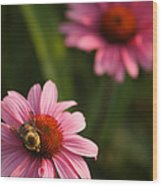 Bee On Coneflower Wood Print