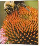 Bee On Coneflower Wood Print