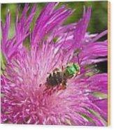 Bee On Corn Flower Wood Print