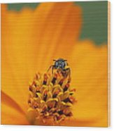 Bee On Cosmo Wood Print