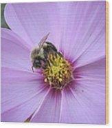 Bee On Cosmos Wood Print