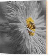 Bee On Daisy Flower Wood Print