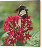 Bee On Flower Cluster Wood Print