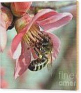 Bee On Flower Wood Print