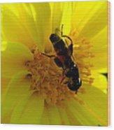 Honey Bee On Sunflower Wood Print