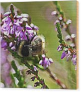 Bee On Heather Wood Print