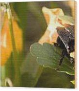 Bee On Leaf Wood Print