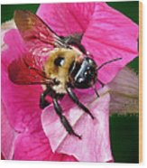Bee On Petunia Wood Print