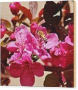 Bee On Pink Blossoms 031015aa Wood Print