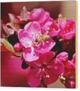 Bee On Pink Blossoms 031015ab Wood Print