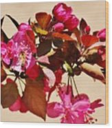 Bee On Pink Blossoms 031015ac Wood Print