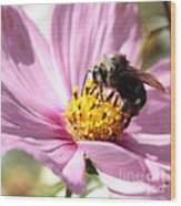 Bee On Pink Cosmos Wood Print
