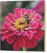 Bee On Pink Flower Wood Print