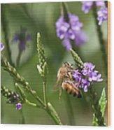 Bee On Purple Loosestrife  Wood Print